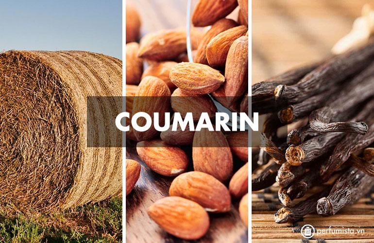 Hương Coumarin