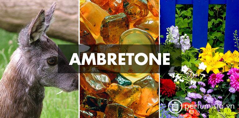 Hương Ambretone