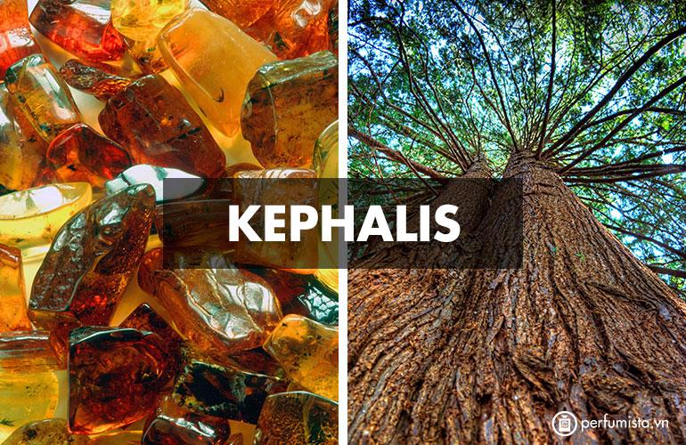 Hương Kephalis