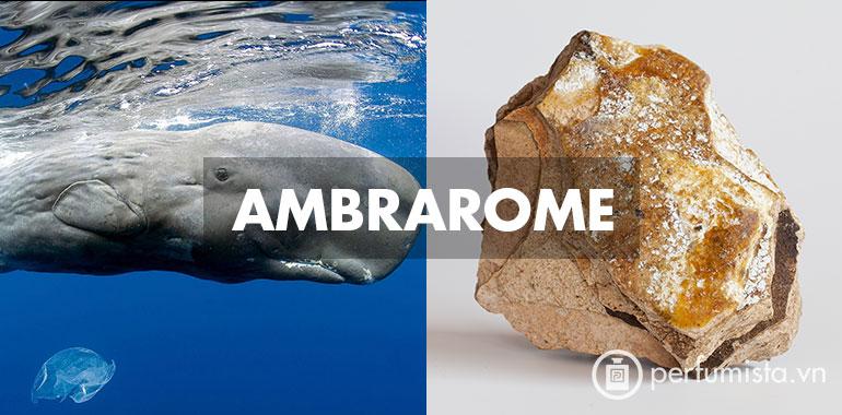 Hương Ambrarome