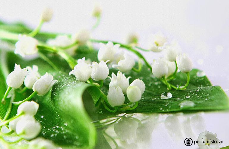 Hoa linh lan thung lũng