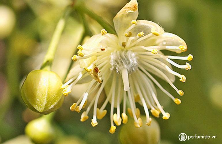 Hoa cây đoạn