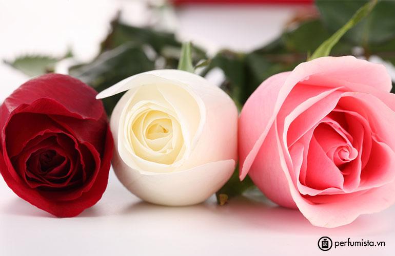 Hoa hồng Đan Mạch